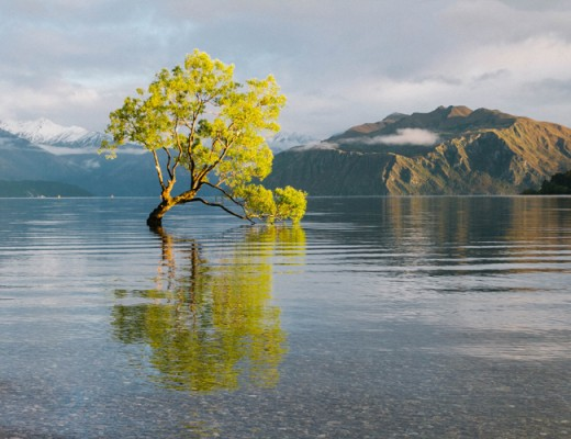 that-wanaka-tree-03